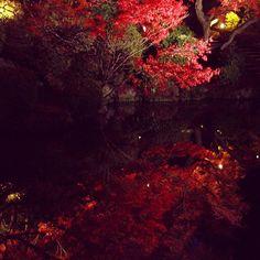 清水寺のライトアップ、最終日でした。 #清水寺 #ライトアップ #京都 #紅葉 #kyoto