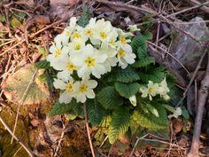 Preludio di primavera
