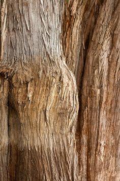 Bild von Rinde von Tule Baum