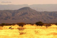 Ethiopia, Awash National Park. How I wish I could be there right now..
