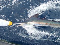 Pesca do Marlim Azul