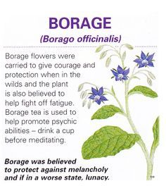 Magical flowers borage