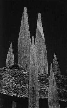 Ansel-Adams-Picket-Fence-1936.