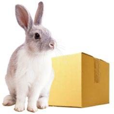 Bestel je BunnyBox abonnement -Automatisch elke drie maanden een nieuwe Box. -Altijd 15% korting op zakken voer. -Elke maand exclusieve aanbiedingen.  Na het bestellen van je eerste box ben je automatisch lid totdat je opzegt en ontvang je elke 3 maanden (Okt. Jan. April en Juli) een nieuwe box vol verrassingen voor je konijnen en heb je toegang tot de V.I.P.only producten waar je elke maand exclusieve aanbiedingen vind.