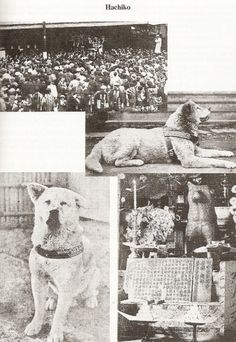 Hachiko, best non-cheasy dog movie based on a true story. Hachiko was an Akita dog breed Animals Of The World, Animals And Pets, Cute Animals, Hachiko Dog, Hachi A Dogs Tale, Yorkshire Dog, A Dog's Tale, Japanese Akita, American Akita