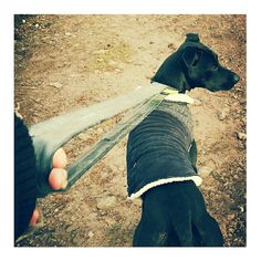 We forgot the lead for today's walk but found this in the van... inner tube dog lead!!! I'm sure I'm not the first person to do this but I would recommend it to everyone. Especially for dogs that pull. Watch this space for new inner tube designs coming soon #innertube #traildog #upcycled #resourceful #doglead #walkies