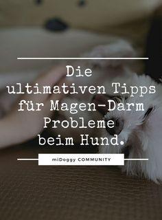 Ihr findet sie hier. || Hund || Tipps || Ideen ||