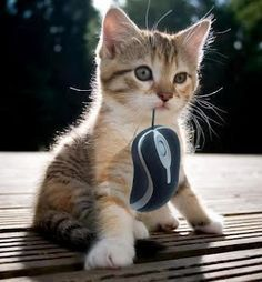 I caught a mouse.