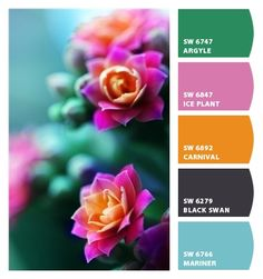 Instantly turn any picture into a palette with ColorSnap, created for you by Sherwin-Williams. Colour Pallette, Color Palate, Colour Schemes, Color Combinations, Design Seeds, Color Stories, Color Swatches, Color Theory, House Colors