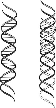 """FROM BIOLOGY TO TRIOLOGY. The above illustration shows how a third strand of DNA might interface with and modify the existing double helix. Both as a possible biological reality and as a metaphor for activating the latent intelligence in potential DNA, the triple helix is genetically consistent with the movement away from a binary or dualistic """"operating system"""" in favor of a trinitized or """"trinary"""" code capable of engendering an evolutionary Shift into unity consciousness."""