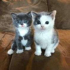 Omg! Look at the faces on these two cuties...WANT!