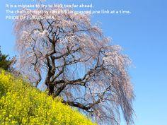 蛇塚の枝垂れ桜