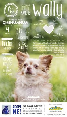 20 Best Easter Adoption Event Images In 2019