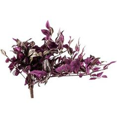 "Add a pop of color and texture to your floral arrangements with this delightful Red Wandering Jew Hanging Bush! This bush features beautiful pops of purple on green with a full look. Use this bush in floral arrangements, wedding décor, home décor and more!    	     	Dimensions:    	  		Stem Length: 3 1/2""  	  		Overall Length: 20""  	  		Flower Width: 22"" (Varies Upon Shaping)"