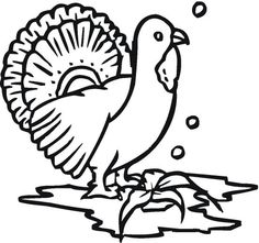 turkey (17).png