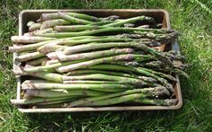 A pan full of delicious asparagus