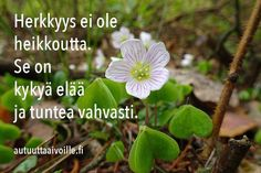 Helmiä elämäni ketjuun: Herkkyys ( autuutta aivoille.fi) Finnish Words, Smart Quotes, Peace Of Mind, Falling In Love, Wise Words, Feel Good, Bff, First Love, Faith