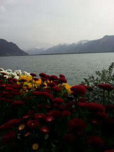 Lago di Ginevra, Montreux. 31.03.2016
