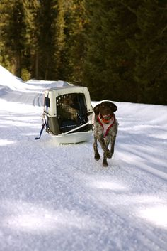 Awesome! Love the dog in the kennel just hanging out, enjoying the ride!!