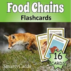 Keep these colorful food chains cards in a science center. They are great for… Keep these colorful food chains cards in a science center. Food Flashcards, Printable Flashcards, Classroom Games, Vocabulary Words, Food Coloring, Colorful Food, Food Chains, Science, Activities