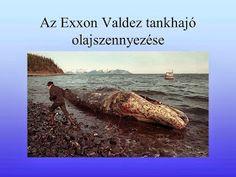 Testvériskolai Projekt Iregszemcse - Győr: A Víz Világnapja Water, Outdoor, Gripe Water, Outdoors, Outdoor Games, The Great Outdoors