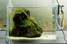Nature Aquarium Gallery 2012 【2】 : ZERO-AQUA