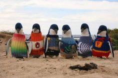 Brei eens een trui die een pinguïn kan redden - De Standaard