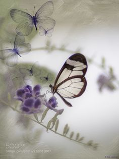 Butterfly Poetry by picspassion. Like http://fb.me/go4photos @go4fotos