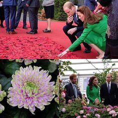 The Duke and Duchess of Cambridge have made their first trip to the Chelsea Flower Show with Prince Harry, where they got to see the stunning Princess Charlotte Chrysanthemum - named after their daughter - and had a touching moment at the 5000 Poppies Garden. Photos courtesy of @kensingtonroyal @the_rhs #chelseaflowershow  via ✨ @padgram ✨(http://dl.padgram.com)