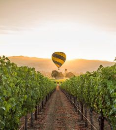 a hot air balloon over vineyards in Napa Valley, California