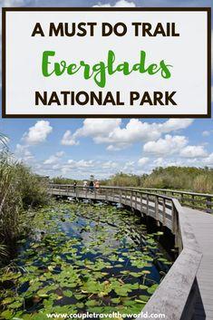 Spotting alligators along the Anhinga Trail Everglades National Park Florida Florida National Parks, Everglades National Park Florida, Biscayne National Park, Florida Vacation, Florida Travel, Florida Keys, Florida Trips, Fl Keys, Visit Florida