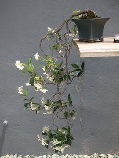 Hanging bonsai