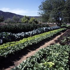 Rancho La Puerta's organic garden. The garden exists only to serve the ranch, and 85-90% of the food served at the ranch is directly from the garden. Amazing, healthy, and DELICIOUS!