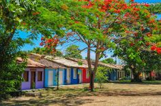 Troncoso - Bahia-Brasil