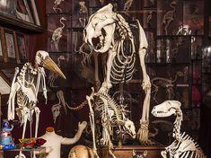 The Viktor Wynd Museum of Curiosity