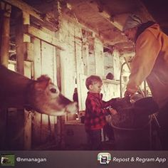 Repost from @nmanagan - helping with the chores at the Wallace Farm this weekend #cabotfarmers #farmlove #cabotcheese #cabotplaid