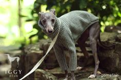 Cable knit style shirts / Light Grey in IGGYplus italian greyhound clothes