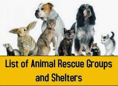 Please contact the Animal Rescue Groups and NO KILL Shelters below before…