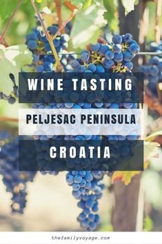 Looking for a daytrip from Dubrovnik? Visit the Peljesac Peninsula for Croatia wine tasting including dignac, plavac mali, and posip. Drink wine in Dalmatia, relax with locals on Prapratno Beach, then dine in Ston. #winetasting