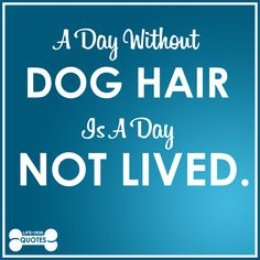 A day without dog hair is a day not lived!
