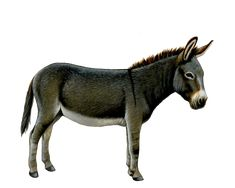 Donkey illustration.