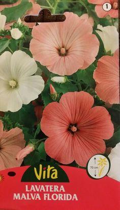 """""""Malva Florida""""  es el nombre botánico de esta especie perteneciente a la familia Malvaceae y es conocida de forma común como: malva real, malvarrosa, malva de las Indias, cañamera real, malva isabela, malva silvestre, malva loca y altea . Sus sinonimias son las siguientes: Alcea biennis, Alcea ficifolia, Alcea rosea, Althaea caribaea, Althaea chinensis, Althaea coromandeliana, Althaea flexuosa, Althaea meonantha, Althaea mexicana, Althaea rosea, Althaea rosea var. sinensis, Althaea…"""