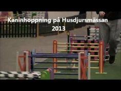 Kaninhoppning på Husdjursmässan 2013 - YouTube