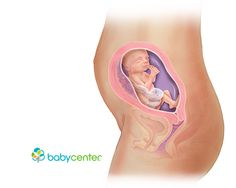 What your baby looks like at 23 weeks @babycenter