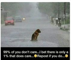 Pains me to look at this picture. Can only hope some kind human scooped up this dog and gave it a loving home.