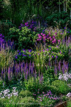 Chelsea Flower Show. Image via: - Garden Design - Chelsea Flower Show. Image via: …, - Purple Garden, Shade Garden, Garden Plants, Lavender Garden, Lush Garden, The Secret Garden, Garden Cottage, Chelsea Flower Show, Garden Borders