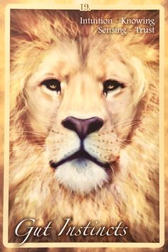 Posts about Lion written by Dee ~ Archangel Oracle Divination Cards, Tarot Cards, Animal Spirit Guides, Spirit Animal, Archangel Raphael, Raphael Angel, Angel Guidance, Oracle Tarot, Angel Cards
