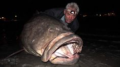 river monsters - i am a bit obsessed with this show