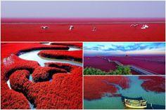 Playa Roja, Panjin, China