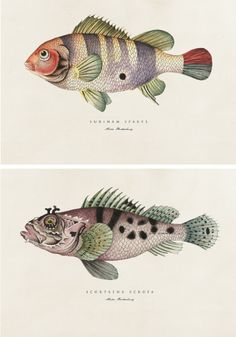 Botanical Fish Prints (watercolour & fineliner) for sale at The Artlab (www.artlab.co.za)